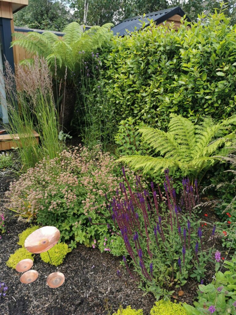 Ferns can do well in Sun, If a Watering system is set up. They are planted with Astrantia in Red,  Salvia in Blue, Plus Golden  Thyme on the ground for all year impact...